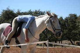 How Do You Know When You've Worked Your Horse Too Hard?